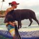 Pig Star, najsłynniejsze świnie na Instagramie!  / Obraz 1